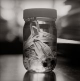 frog skeleton floating in a jar