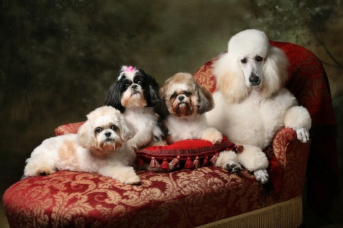 Parker-Smith_dogs-on-sofa